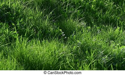 Young green grass in spring, fragment