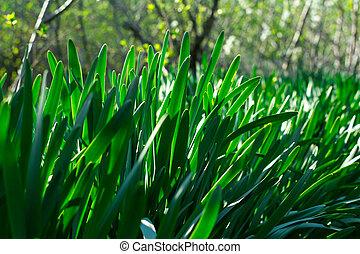 Young Green Grass. Sun day. Awakening of nature