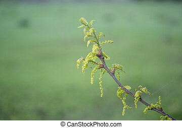 Young green oak branch in spring on a blurred background.