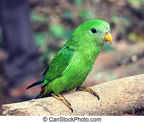young Green Parrot on a branch in the forest