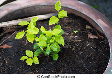 Young green plant growing on ground