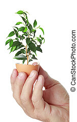 young green plant in an eggshell - concept, symbolizing new...