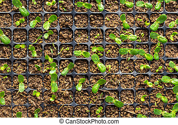 Young green plant in plastic for planting on wooden table
