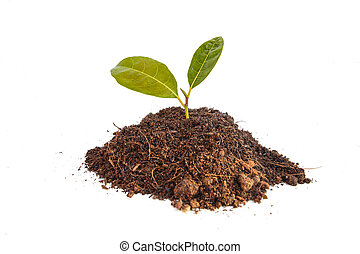 Young green plant in soil isolated on white background