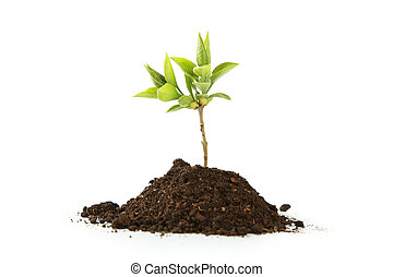 Young green plant in soil isolated on white