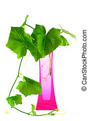 Young green plant in vase isolated