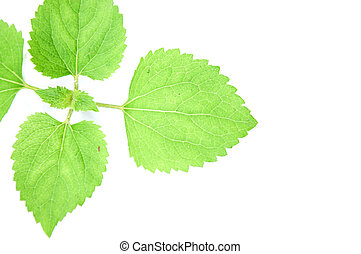 Young Green Plant on white background.