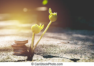 Young green plant with stack coin on ground for growing business financial concept.