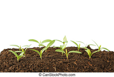 Young green plants in soil on white background