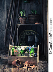 Young green plants in the rustic cottage