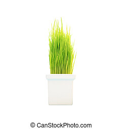 Young green rice plant in pot on white background.