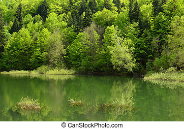 Young, green spring forest on the lake shore