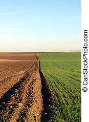 Young green wheat and plowed field autumn season