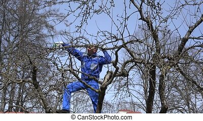 Young grower man pruning branches with shears high on tree...