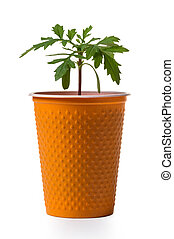 young growing plant in a pot