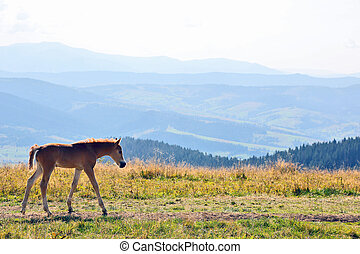 young horse against a mountain landscape
