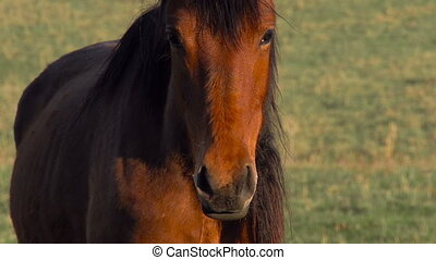 Young Horse - The horse looks curiously at the camera and...