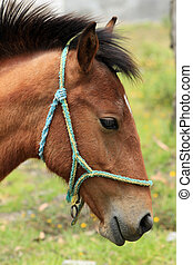 Young Horse With a Bridle