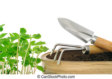 Young impatiens flowers and gardening tools, isolated on white