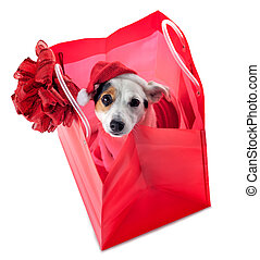 Young Jack Russel wearing santa claus dress in red shopping ...