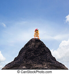 young kid chick baby standing on top peak of mountain...