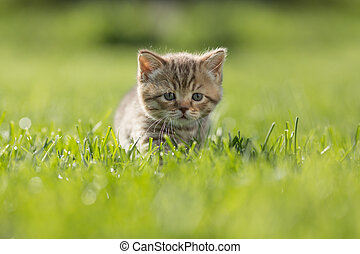 Young kitten in green grass