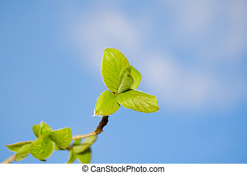young leaves on blue sky