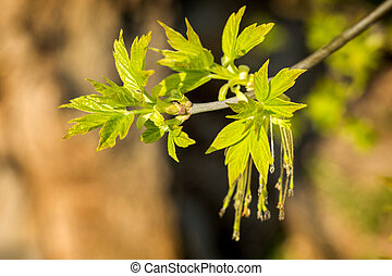 Young leaves on the branch