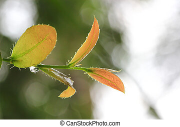 young leaves