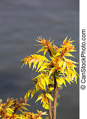 Young Leaves - The First Spring Gentle Leaves. Close up. ...