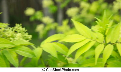 Young leaves of the trees swaying in the wind in the spring. Close-up