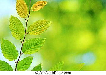 Young leaves with fresh green background in spring