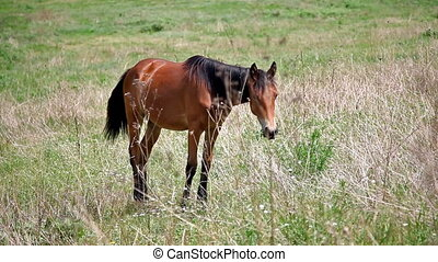 young lonely horse steeding among grass on glade HD video...