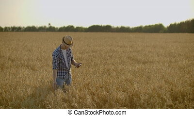 Young male farmer holding tablet in wheat field. - Young...