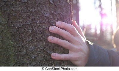 Young male hand stroking a bark of pine with sun light at background. Unrecognizable man touching a trunk of tree in the forest on sunny day. Concept of environmental protection. Close up Slow motion
