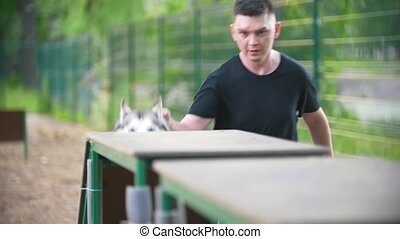 Young male handler train husky on the overpass outdoors at...