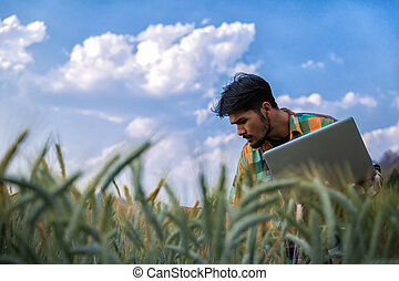 Young man agriculture engineer squatting in gold wheat field with laptop in hands in early summer