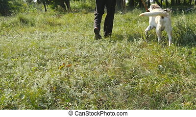 Young man and dog playing with wooden stick outdoor at nature. Labrador or golden retriever and his male owner spend time together at the green meadow. Guy and domestic animal. Close up