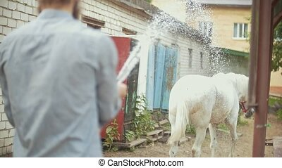 Young man cleaning the horse by a hose with water stream....