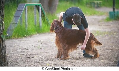 Young man cleans the long hair of his dog breed red irish...