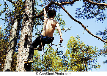 young brunette man climbing on tree with rope