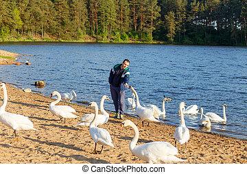 Young man feeding a white swan