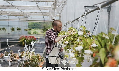 Young man gardener in a large greenhouse.