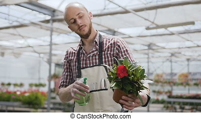 Young man gardener wearing apron is watering pot plant and...