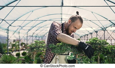 Young man gardener working in a large greenhouse.