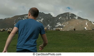 Young man goes through meadow where sheep graze in outdoors. He quickly heads to fluffy animals who eat green grass.