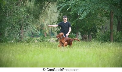 Young man plays with his pet dog - irish setter. Male give...