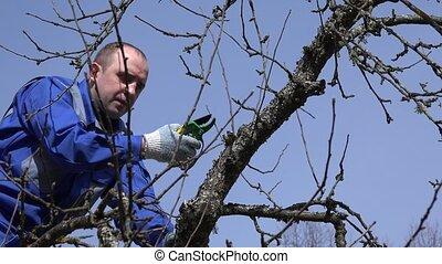 young man prune apple tree branch on blue sky background. 4K