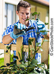 young man pruning shrub branch
