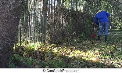 young man rake dry leaves near fence in own backyard. 4K